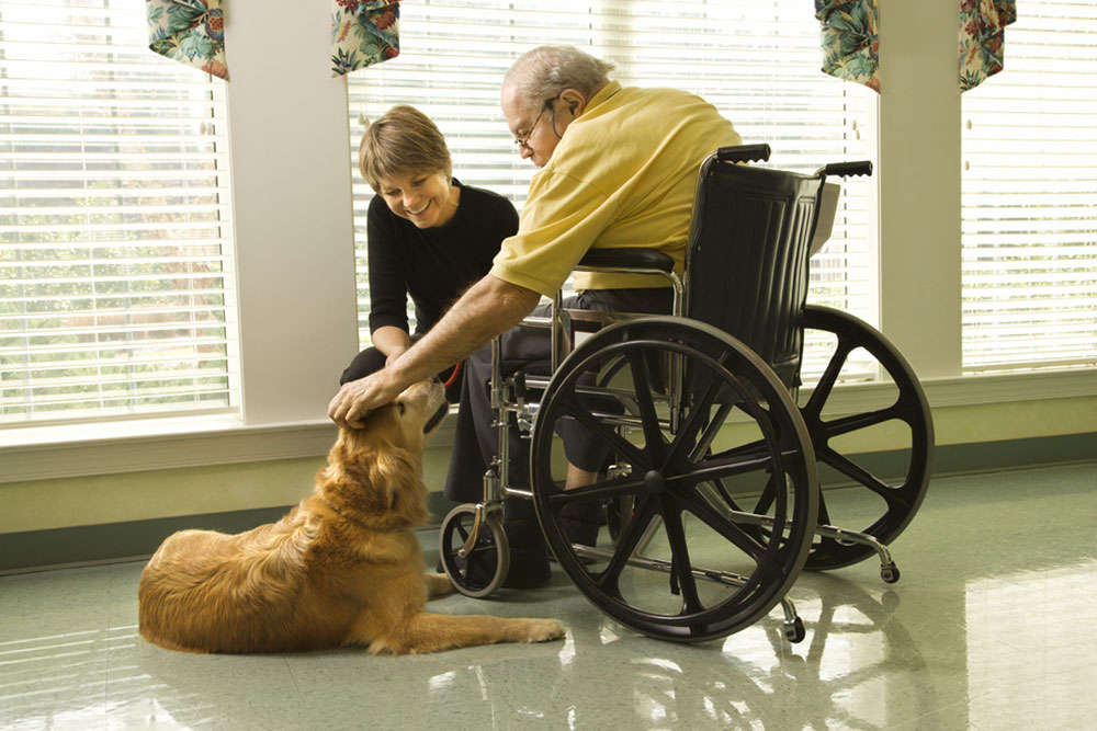 Therapy dog is pet by an elderly man in a wheelchair and a younger woman. Horizontal shot